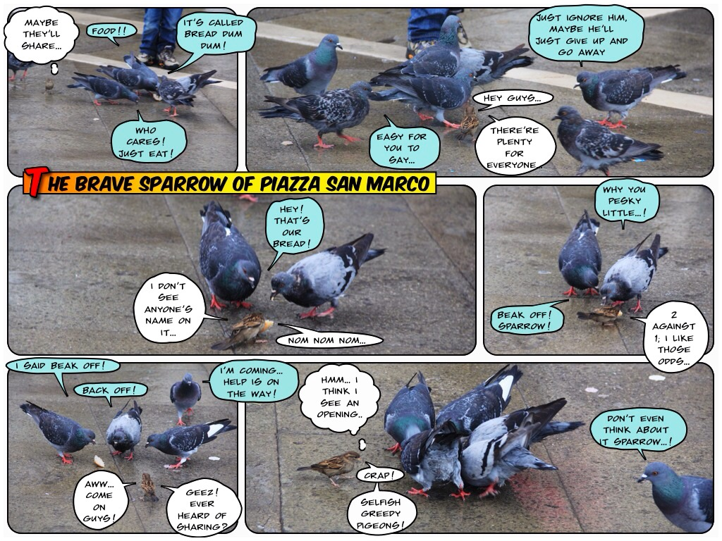 The SIA Brat Comic Strip: The Brave Sparrow of Piazza San Marco ...