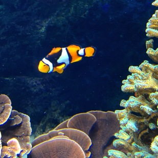 Nemo and Marlin's relative